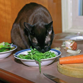 Cat Enjoying Salad by Sally Weigand