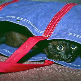 Cat in Bag by Sally Weigand