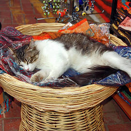 Cat in Basket by Sally Weigand