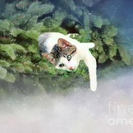 Janette Boyd - Cat in Evergreen