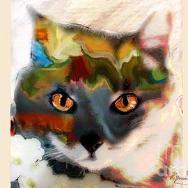 Cat Magic by Marcy Orendorff