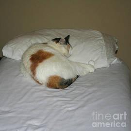 Cat nap by William H Freeman Jr