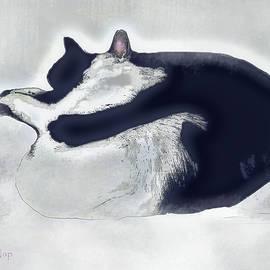 Cat Nap Chasing the Light by Zsanan Studio