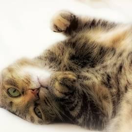 Cat Napping, Dreamy Cute Sleepy Kitty by Melissa Bittinger