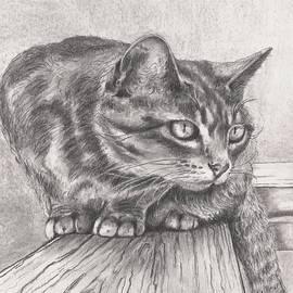 Cat on a Ledge by Pamela Humbargar