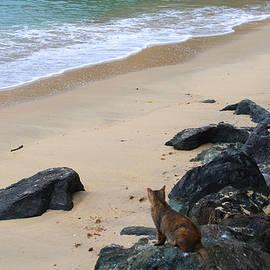 Cat on the Beach by Deborah Napelitano