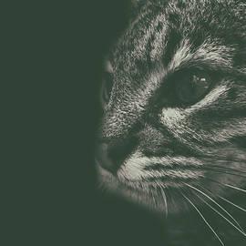 Cat Portrait - Martin Newman