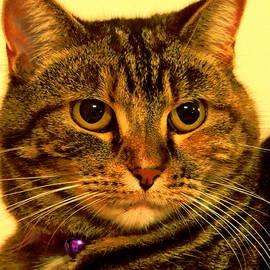Ron Dean - Cat Portrait
