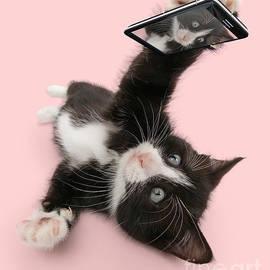 Cat Selfie by Warren Photographic