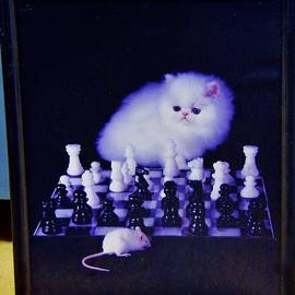 Cat With Chess Board Anbd Mouse by Phyllis Spoor