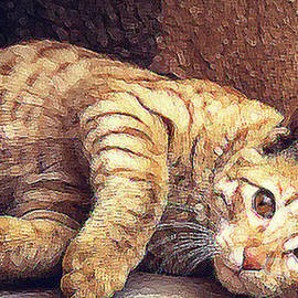 Cat, Yellow Tabby Purrfect