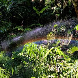 Catch A Rainbow by Pamela Walton
