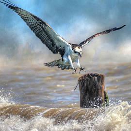 Donna Kennedy - Catch A Wave