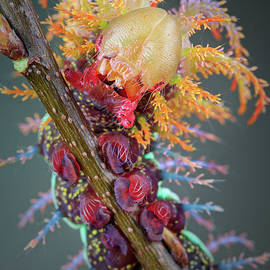 Marco Fischer - Caterpillar Portrait
