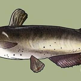 A C - Catfish Drawing