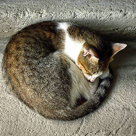 Catnapping Market Cat in St. Lucia by Bill Swartwout Photography