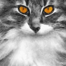 Ian Mitchell - Cats Eyes