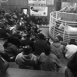 Cattle And Horse Auction by Robin Lewis
