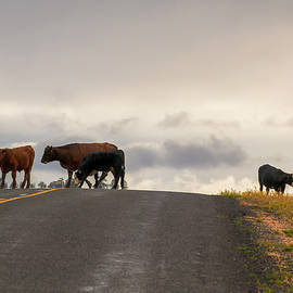 Kristina Rinell - Cattle Crossing 0700