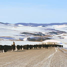 Ed Mosier - Cattle Drive Panorama