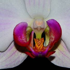 George Bostian - Centerpiece - Orchid 014