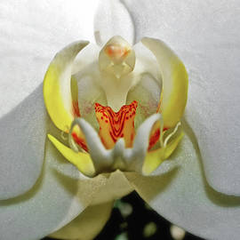 George Bostian - Centerpiece - White Orchid 030