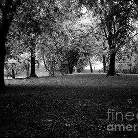 New York Central Park Forest by M G Whittingham
