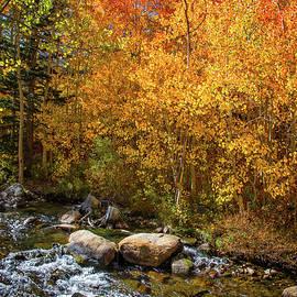 Changing Aspens Along Bishop Creek by Lynn Bauer