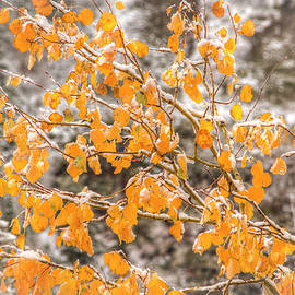 Kristina Rinell - Changing Seasons 0652