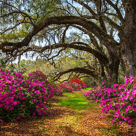 Dave Allen - Charleston SC Spring Flowers Scenic Landscape South Carolina