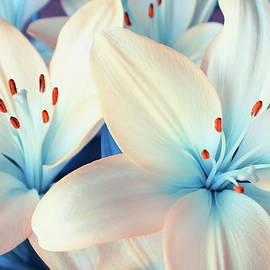 Iryna Goodall - Charming Elegance