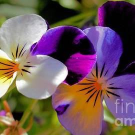 Charming Viola 2 by Victor K