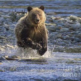 Chasing Salmon by Inge Riis McDonald