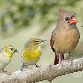 Bonnie Barry - Cheerful Little Songbirds
