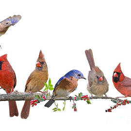 Bonnie Barry - Cheerful Songbird Congregation