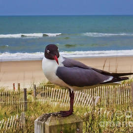 Cheese by Seagull by Roberta Byram