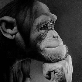 Miro Gradinscak - The Thinker