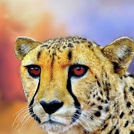Janette Boyd - Cheetah