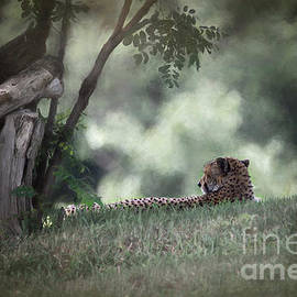 Cheetah On Watch by Sharon McConnell