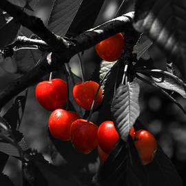 Cherries2 by Damijana Cermelj