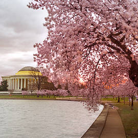 Cherry Blossom At Tidal Basin, Dc by Rima Biswas