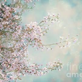 Cherry Blossom Dreams by Linda Lees