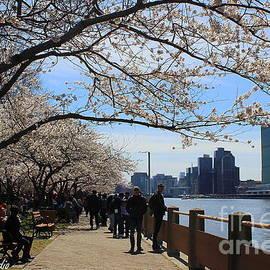 Dora Sofia Caputo Photographic Design and Fine Art - Cherry Blossom Festival - New York City