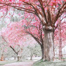 Charline Xia - Cherry Blossom Path