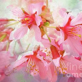 Cherry Blossom Serenity by Regina Geoghan