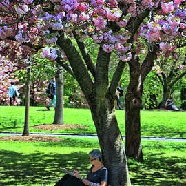 Allen Beatty - Cherry Blossom Trees of B B G #1