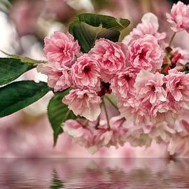 Geraldine Scull - Cherry Blossom wall hanging