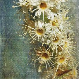 Cherry Laurel Flowers by Liz Alderdice