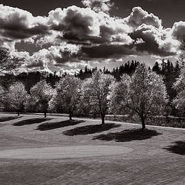 Mike Penney - Cherry Tree Bloom BW