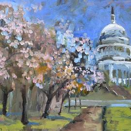 Donna Tuten - Cherry Tree Blossoms in Washington DC